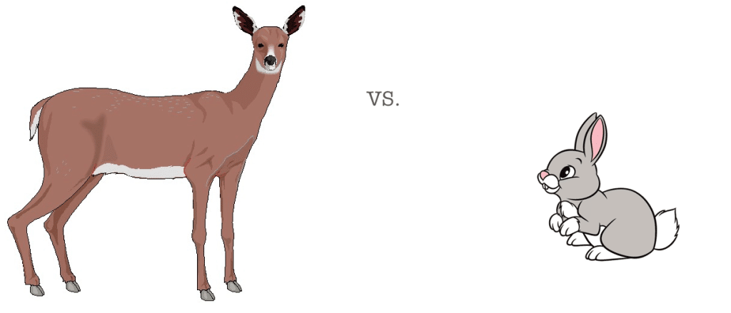 deer vs rabbit